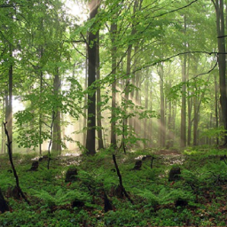 com_krisdev_forest1_m_ILZJ.png